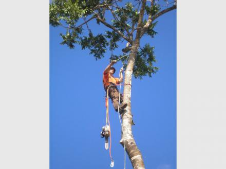 Airlie Tree Specialists