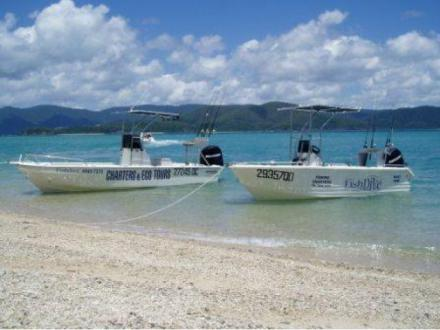 Fishdive Charters - Airlie Beach Fishing Charters