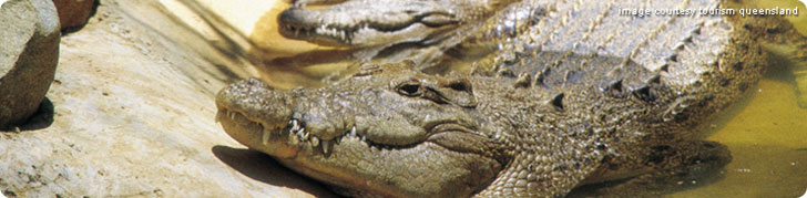 Smile At Crocodile On This Cruise - Travel Article