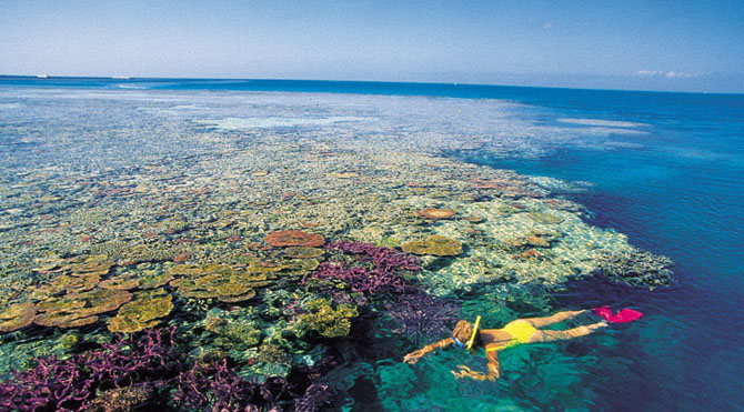 Snorkeling Hardy Reef - Picture Tour