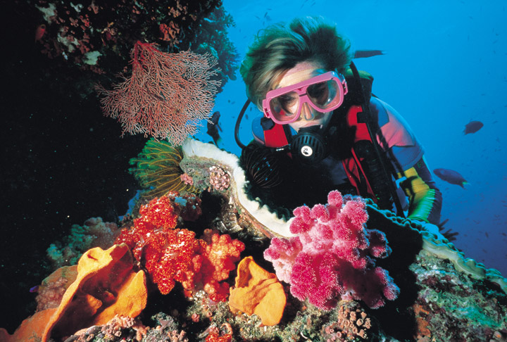 The waters around the whitsundays offers some of the best scuba diving